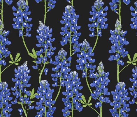 Rtexas-bluebonnet-botanical-illustration-on-charcoal_shop_preview