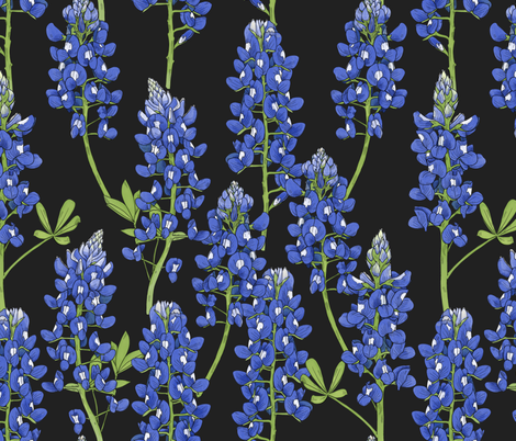 Large Scale Texas Bluebonnet Botanical Illustration on Charcoal fabric by landpenguin on Spoonflower - custom fabric
