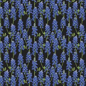 Small Scale Texas Bluebonnet Botanical Illustration on Charcoal