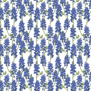 Small Scale Texas Bluebonnet Botanical Illustration