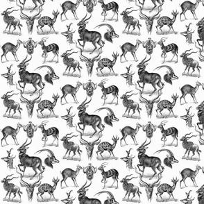 Ernst Haeckel Antilopina Deer