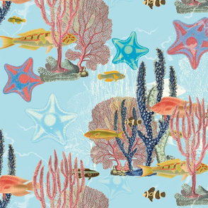 Colourful Coral Sea