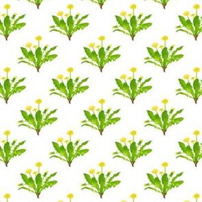 Dandelion Bunches