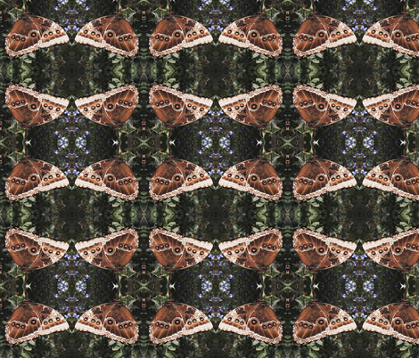 Butterfly  in chocolate colours fabric by fabric_and_paper on Spoonflower - custom fabric