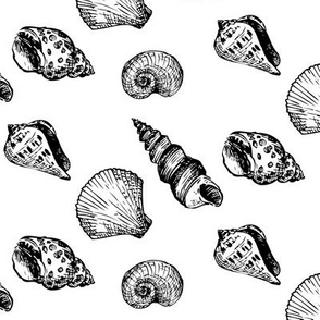 Shell Scatter BW