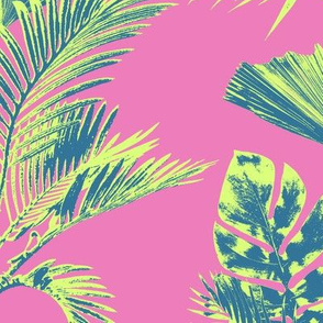 Milagros Palm in Pink