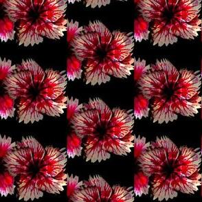 Pink Flower Elegance