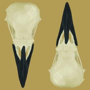 Large Raven Skulls
