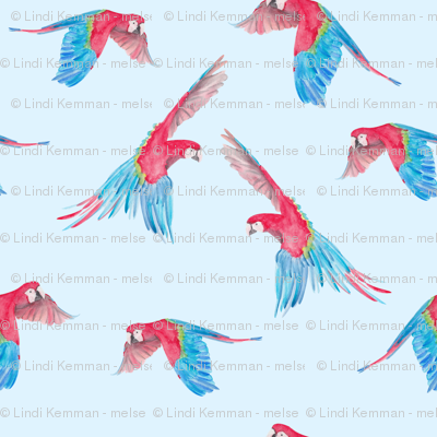 colorful parrot in the air / flying birds