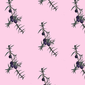 juniper colored pink