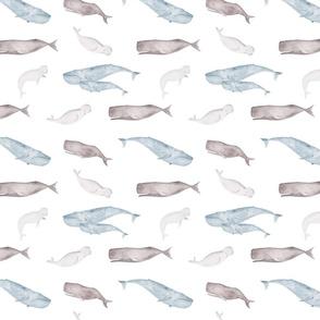Whales ocean animals sealife