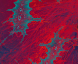 Rrred-on-lichen_thumb