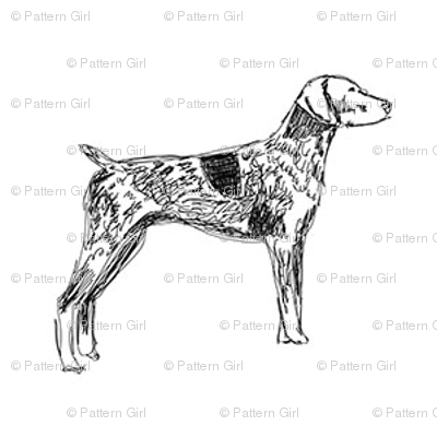 german shorthaired pointer fabric, dog fabric, dogs fabric, pet fabric, - black and white