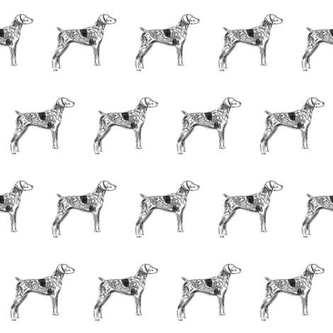 german shorthaired pointer fabric, dog fabric, dogs fabric, pet fabric, - black and white fabric by patterngirl on Spoonflower - custom fabric
