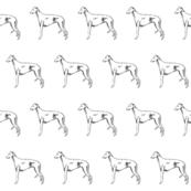 italian greyhound fabric, dog fabric, dogs fabric, pet fabric, - black and white