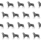 rottweiler fabric, dog fabric, dogs fabric, pet fabric, - black and white