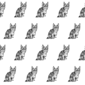 yorkshire terrier fabric, yorkie fabric, dog fabric, dogs fabric, pet fabric, - black and white