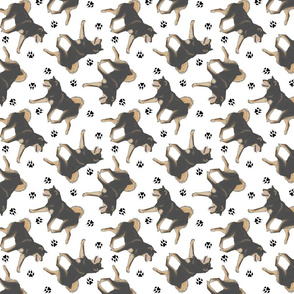 Trotting black and tan Shiba Inu and paw prints - white