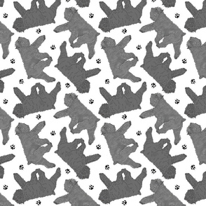 Trotting Bouvier des Flandres and paw prints C - white