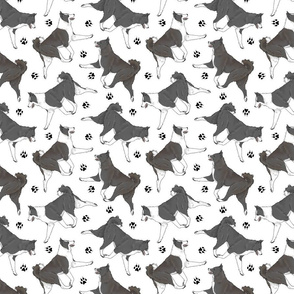 Trotting Karelian Bear dogs and paw prints - white
