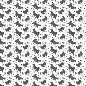 Trotting Karelian Bear dogs and paw prints - tiny white