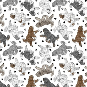 Trotting Polish Lowland Sheepdogs and paw prints B - white