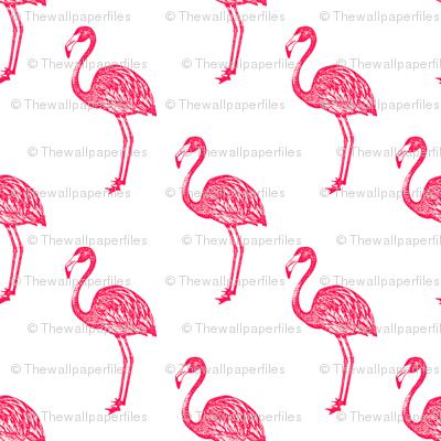 American Flamingo (pink)