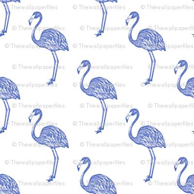 American Flamingo (blue)