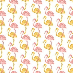 Adelaide Flamingo