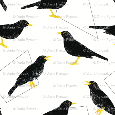 Common blackbirds and geometric shapes
