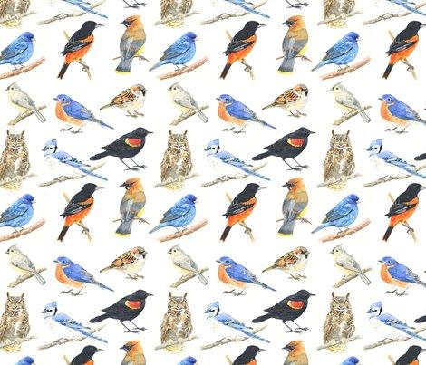 Rmassachusetts_birds_shop_preview