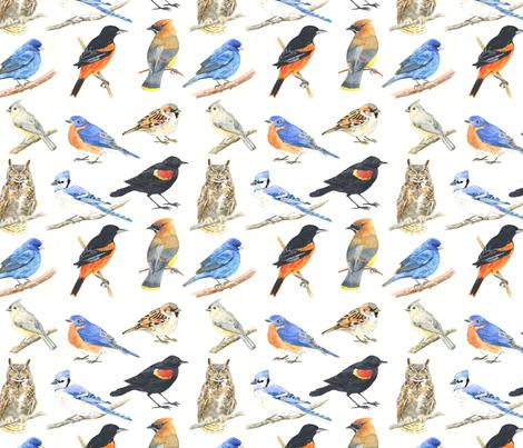 Massachusetts Birds fabric by alisonkolesar on Spoonflower - custom fabric
