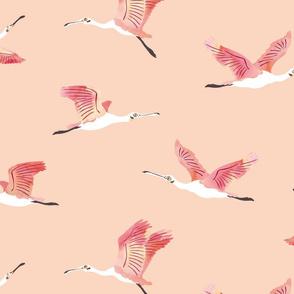 Peach roseate spoonbills