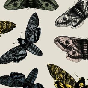 scattered moths grey no logo