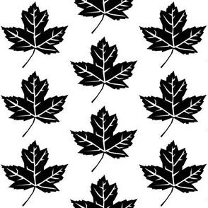 black maple leaves