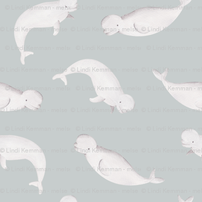 Beluga whale | ocean animals