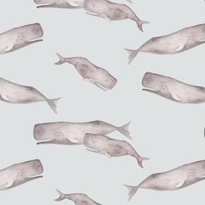 Sperm whale oceanlife