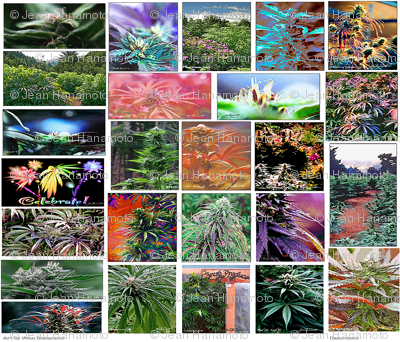 Camomoto 420 Art Collection