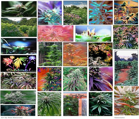 Rrcamomoto420artcollection_shop_preview