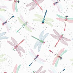 Pretty Dragonflies