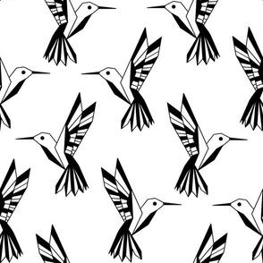 Black and white humming birds
