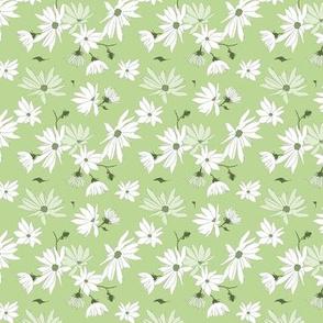 topinambour (jerusalem artichoke) blossoms on light green - small