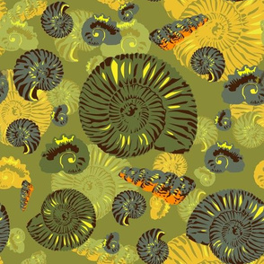 ammonites - large