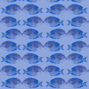 Sea of Love Blue Tang