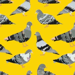 Elegant Pigeons