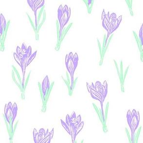 pastel lavender crocuses