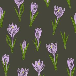lavender crocuses on khaki