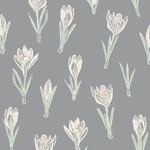 cream-colored crocuses on grey