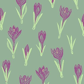 purple crocuses on green