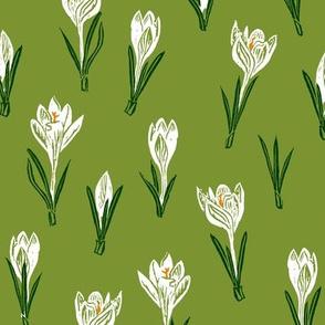 white crocuses on moss green